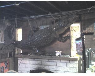 Linger gator